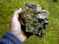 A handpiece of consolidated oyster reef