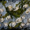 oysters-on-ice-jeremy-koreski